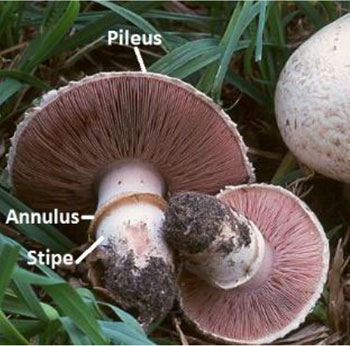 Cultivation and Environmental Impact of Mushrooms - Oxford
